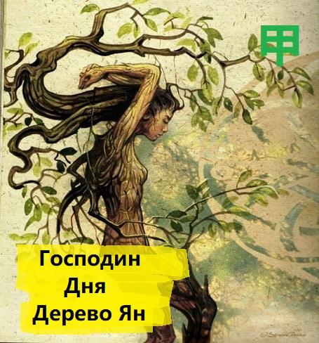 Все о Господине дня Дерево Ян
