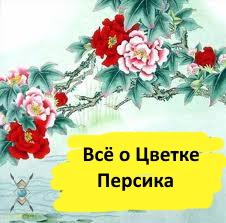 """Электронная книга """"Всё о Цветке персика"""""""